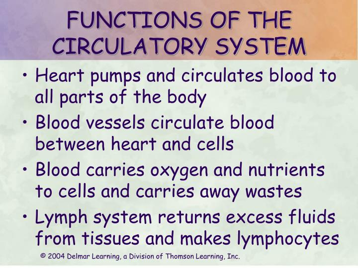 Functions of the circulatory system