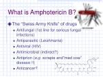 what is amphotericin b