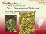 class magnoliopsida order ranunculales family ranunculaceae buttercups