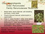 class magnoliopsida order ranunculales family ranunculaceae buttercups6