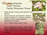 class magnoliopsida order rosales family rosaceae roses11