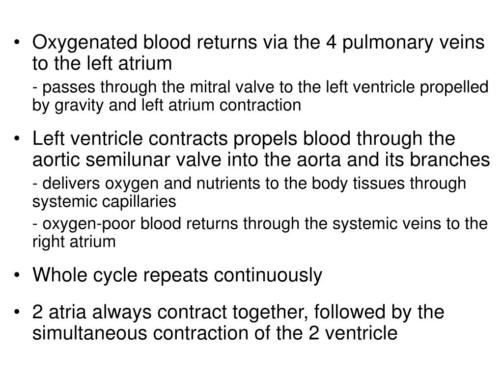 Oxygenated blood returns via the 4 pulmonary veins to the left atrium