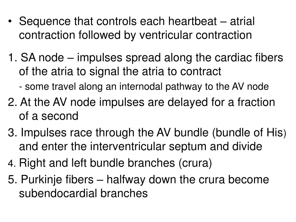 Sequence that controls each heartbeat – atrial contraction followed by ventricular contraction