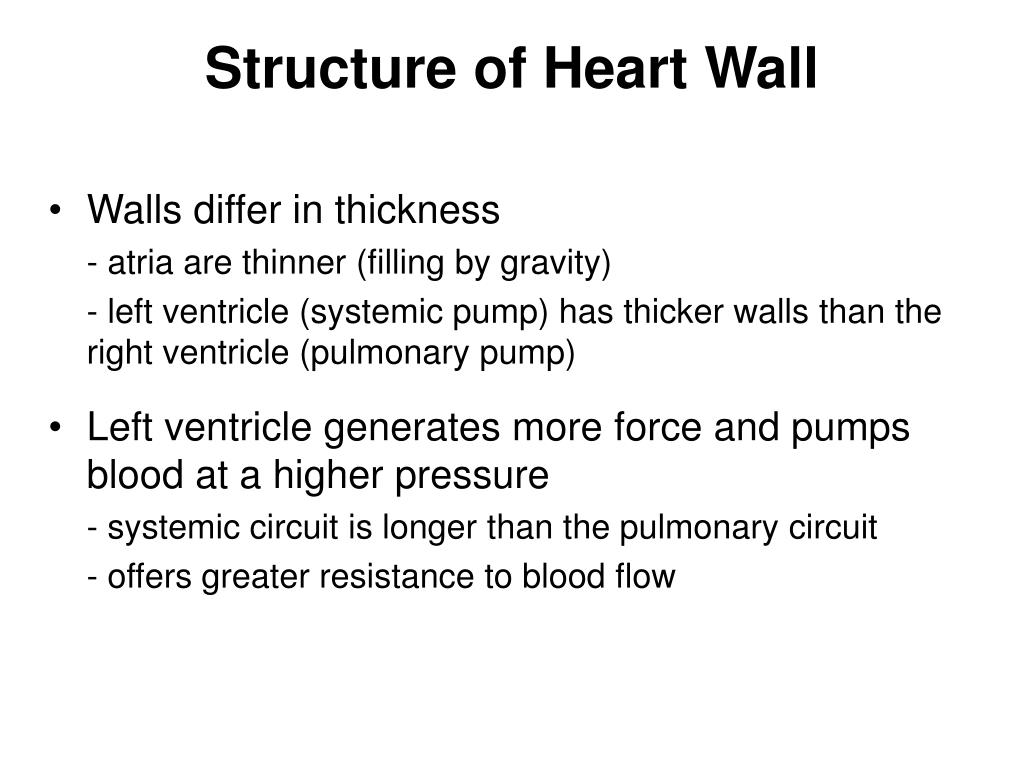 Structure of Heart Wall