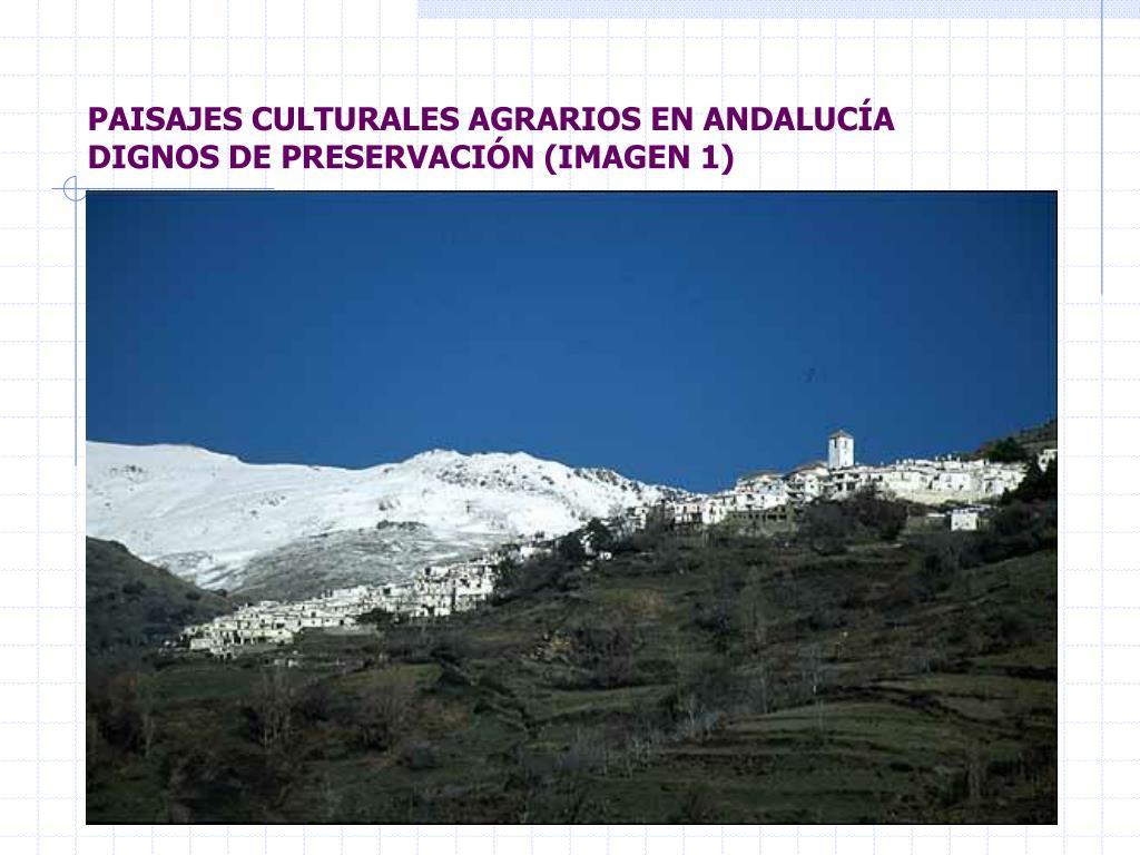 PAISAJES CULTURALES AGRARIOS EN ANDALUCÍA DIGNOS DE PRESERVACIÓN (IMAGEN 1)