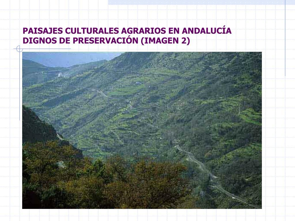PAISAJES CULTURALES AGRARIOS EN ANDALUCÍA DIGNOS DE PRESERVACIÓN (IMAGEN 2)