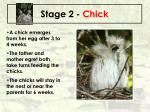stage 2 chick