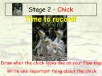 stage 2 chick31