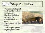 stage 2 tadpole
