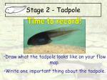 stage 2 tadpole7