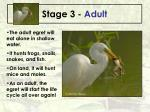 stage 3 adult