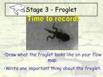 stage 3 froglet