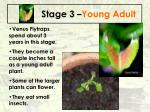 stage 3 young adult
