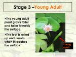 stage 3 young adult64
