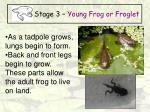 stage 3 young frog or froglet