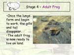 stage 4 adult frog