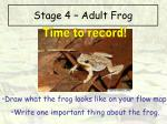 stage 4 adult frog12