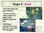 stage 4 adult66