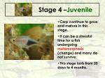 stage 4 juvenile