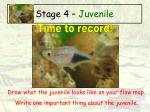 stage 4 juvenile44
