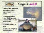 stage 5 adult