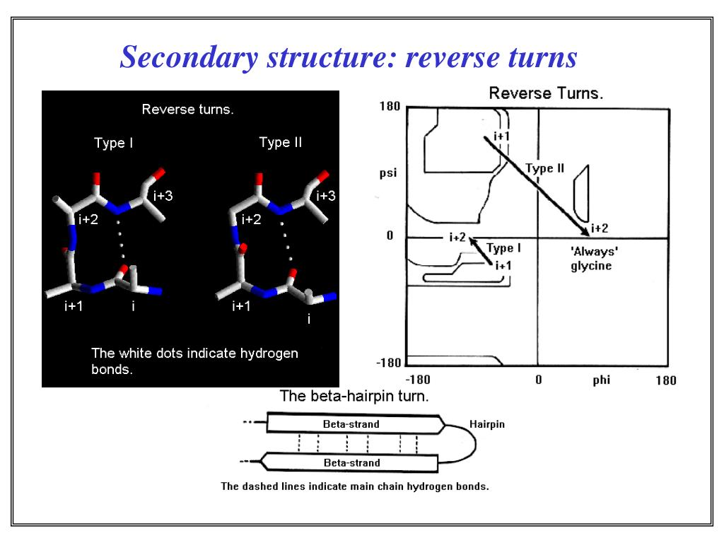 Secondary structure: reverse turns