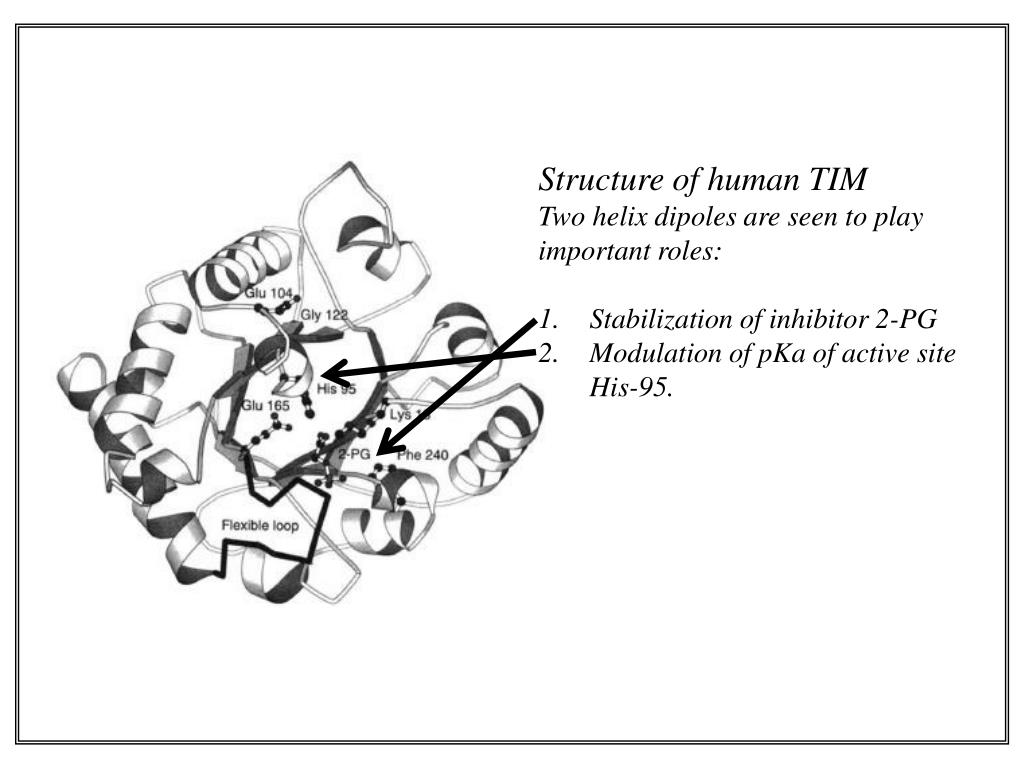 Structure of human TIM