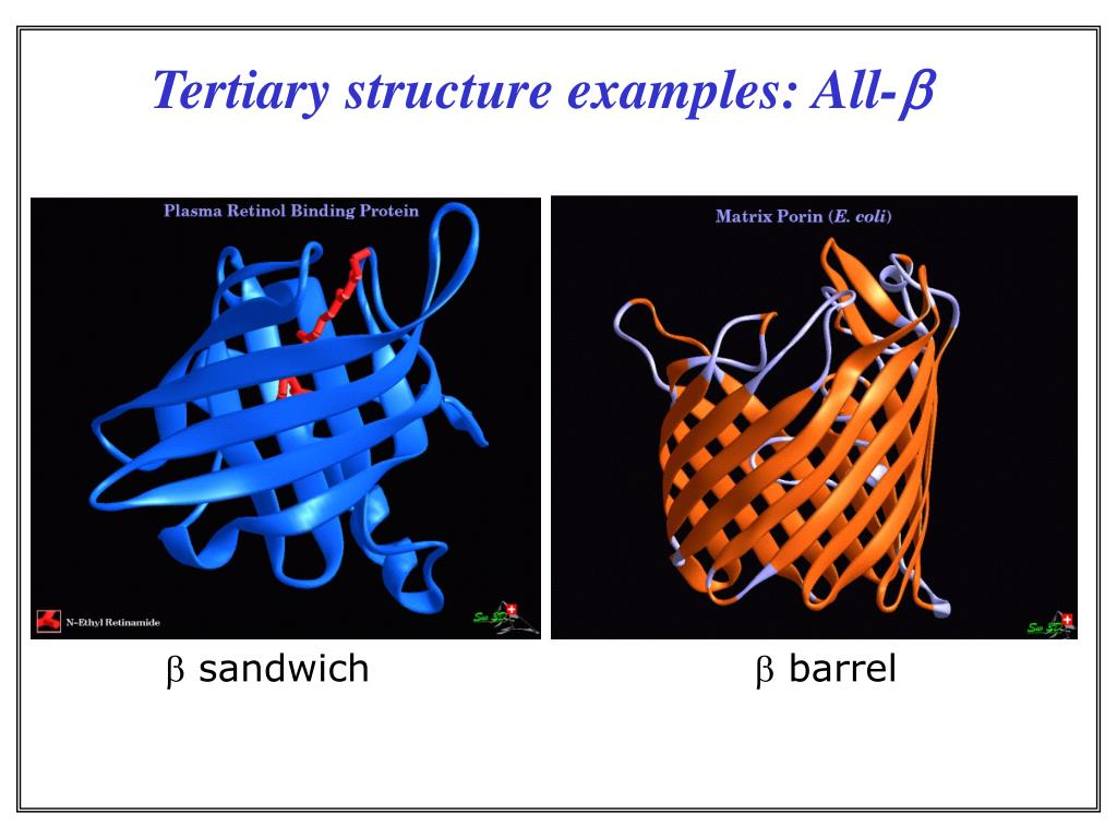 Tertiary structure examples: All-