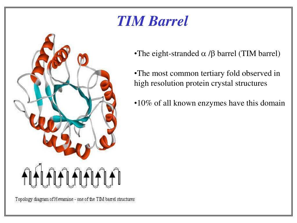 TIM Barrel