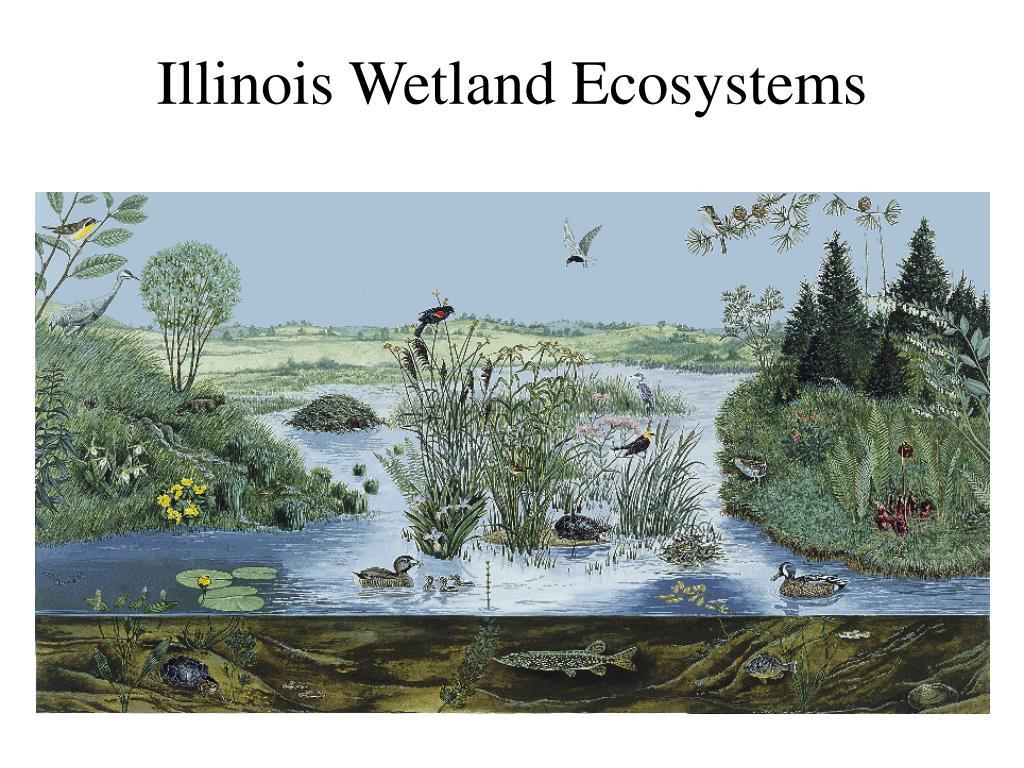 illinois wetland ecosystems l.