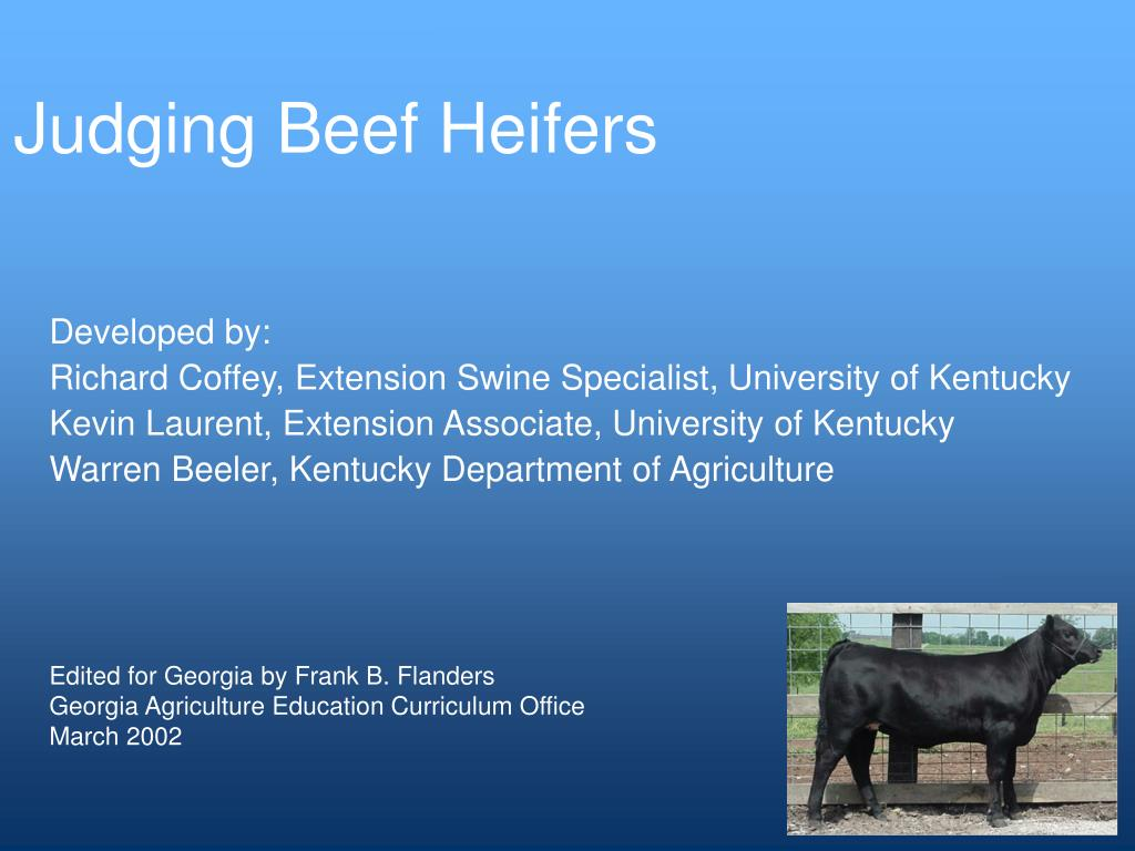 Judging Beef Heifers