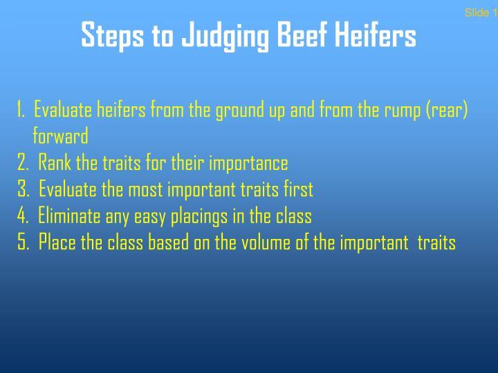 Steps to judging beef heifers