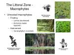 the littoral zone macrophytes17