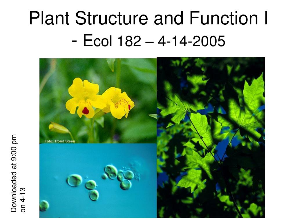 plant structure and function i e col 182 4 14 2005 l.