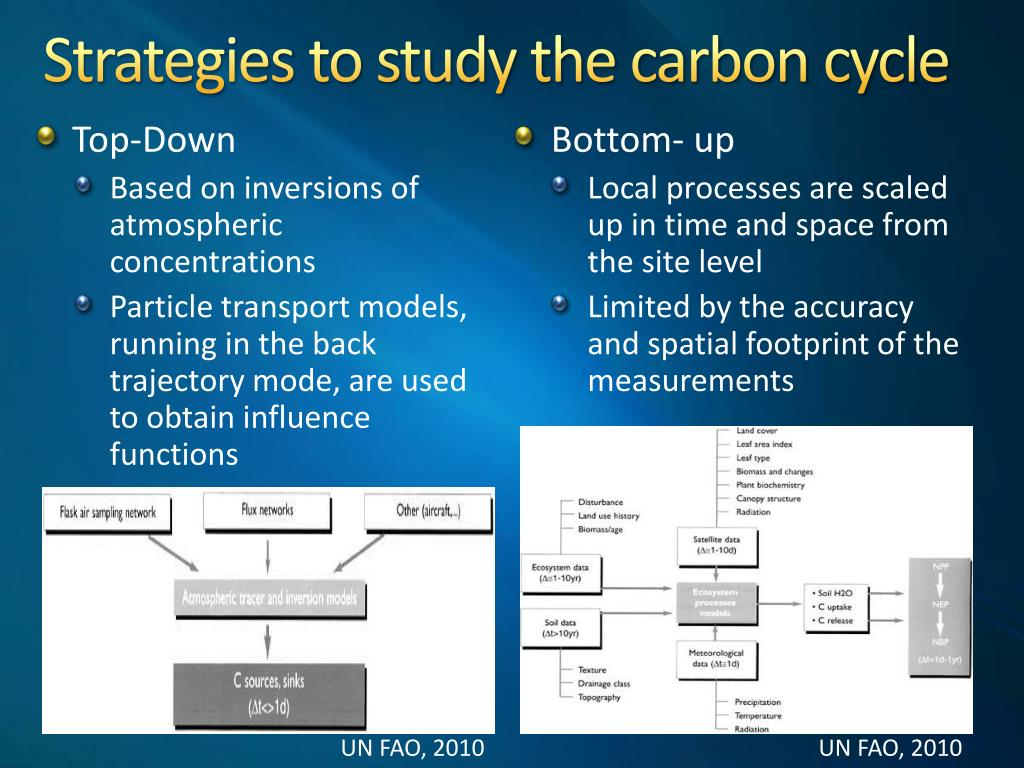 Strategies to study the carbon cycle