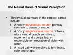 the neural basis of visual perception47
