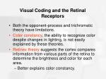 visual coding and the retinal receptors28