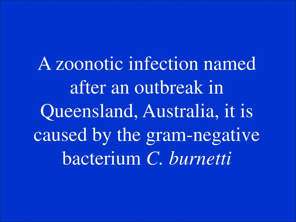 A zoonotic infection named after an outbreak in Queensland, Australia, it is caused by the gram-negative bacterium