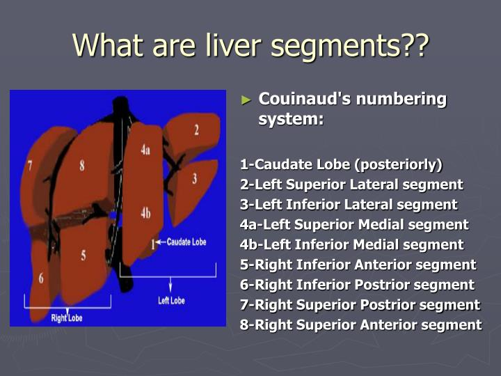 Ppt What Is The Liver Powerpoint Presentation Id373722