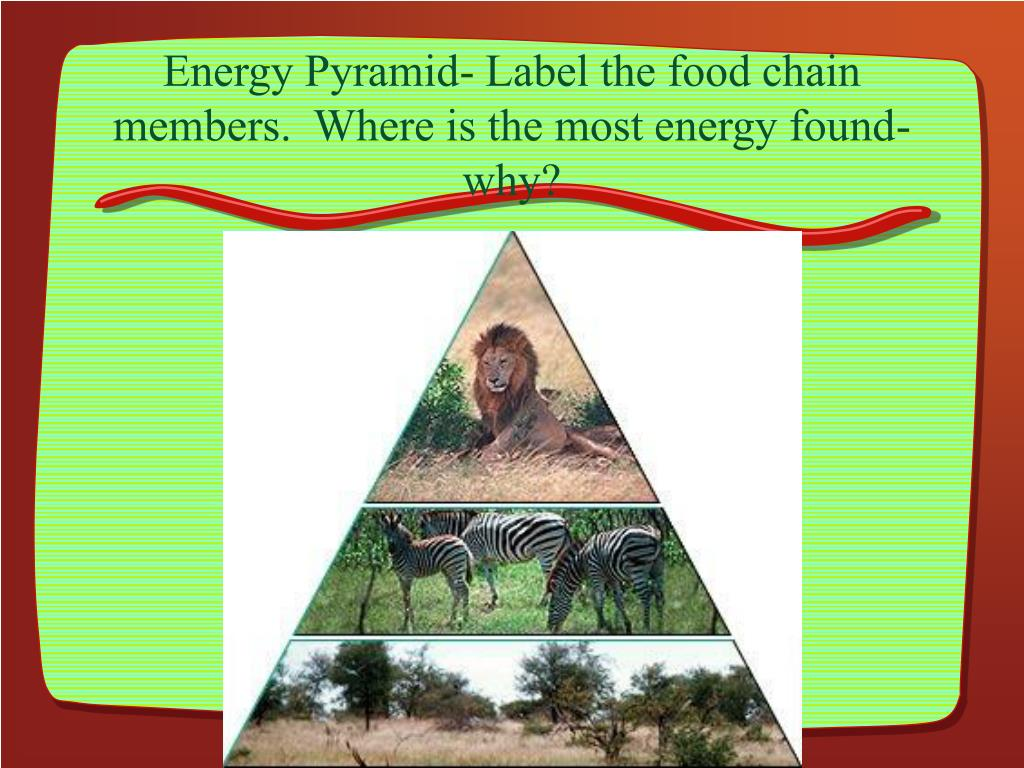 Energy Pyramid- Label the food chain members.  Where is the most energy found- why?