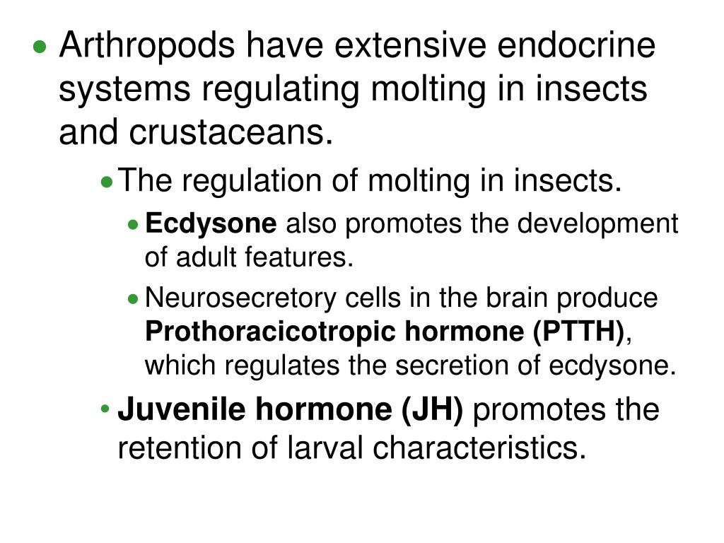 Arthropods have extensive endocrine systems regulating molting in insects and crustaceans.