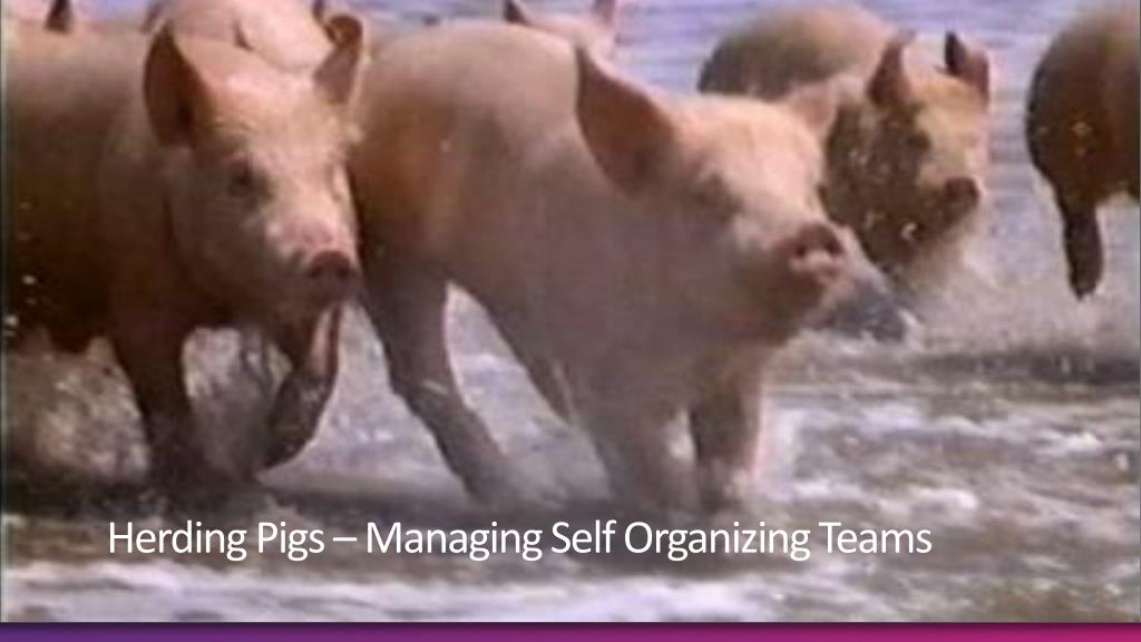 Herding Pigs – Managing Self Organizing Teams