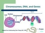 chromosomes dna and genes