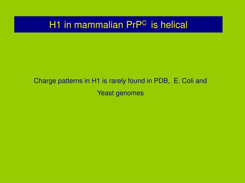 H1 in mammalian PrP