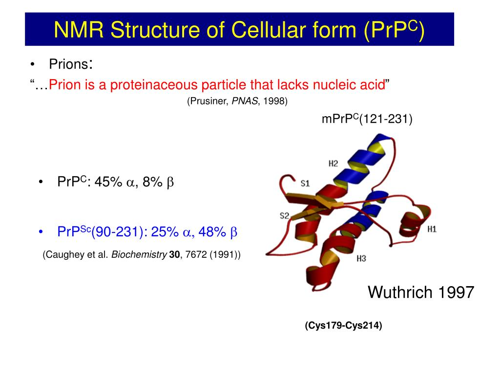 NMR Structure of Cellular form (PrP
