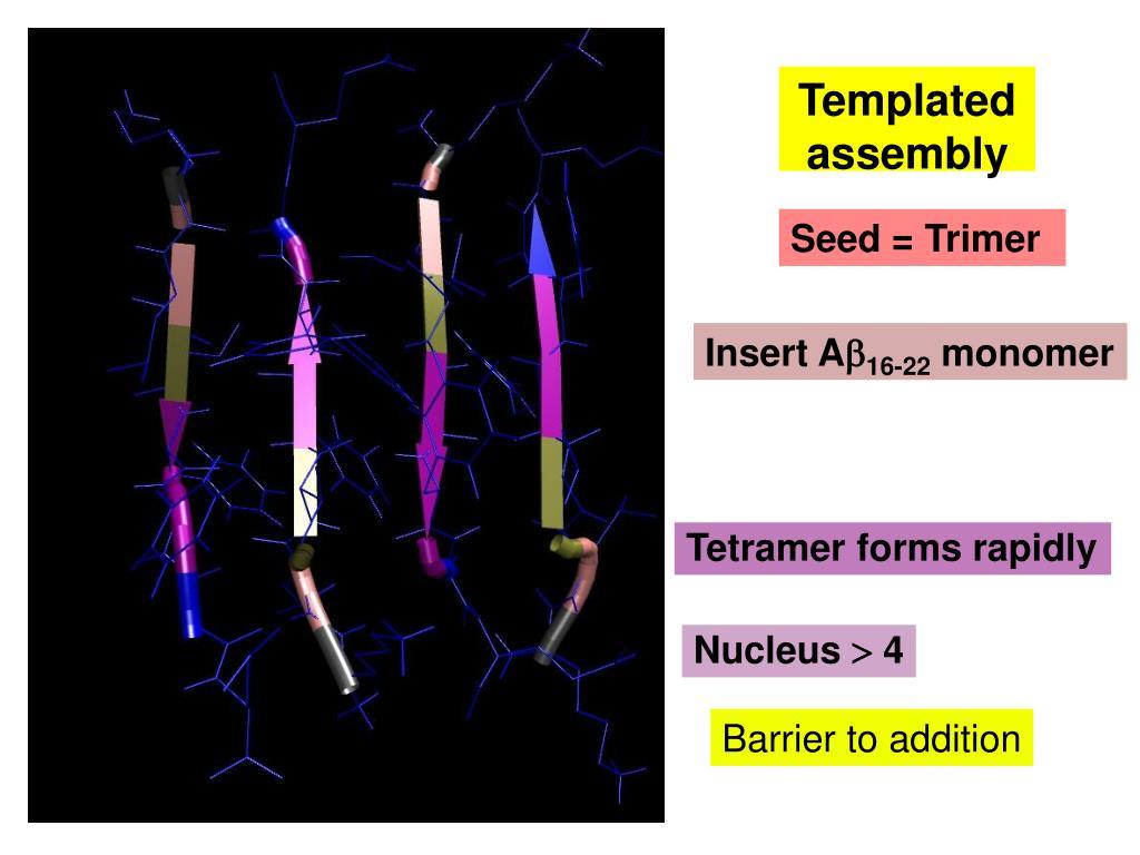 Tetramer forms rapidly