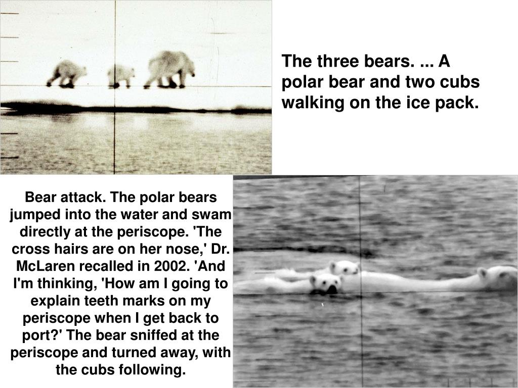 The three bears. ... A polar bear and two cubs walking on the ice pack.