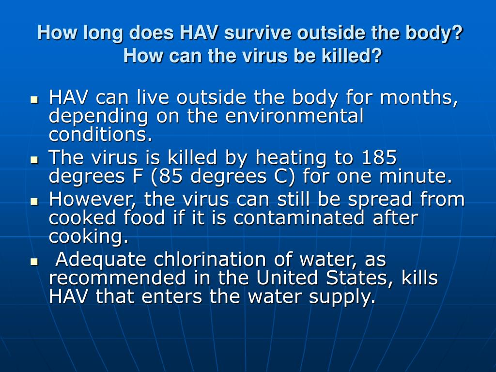 How long does HAV survive outside the body?