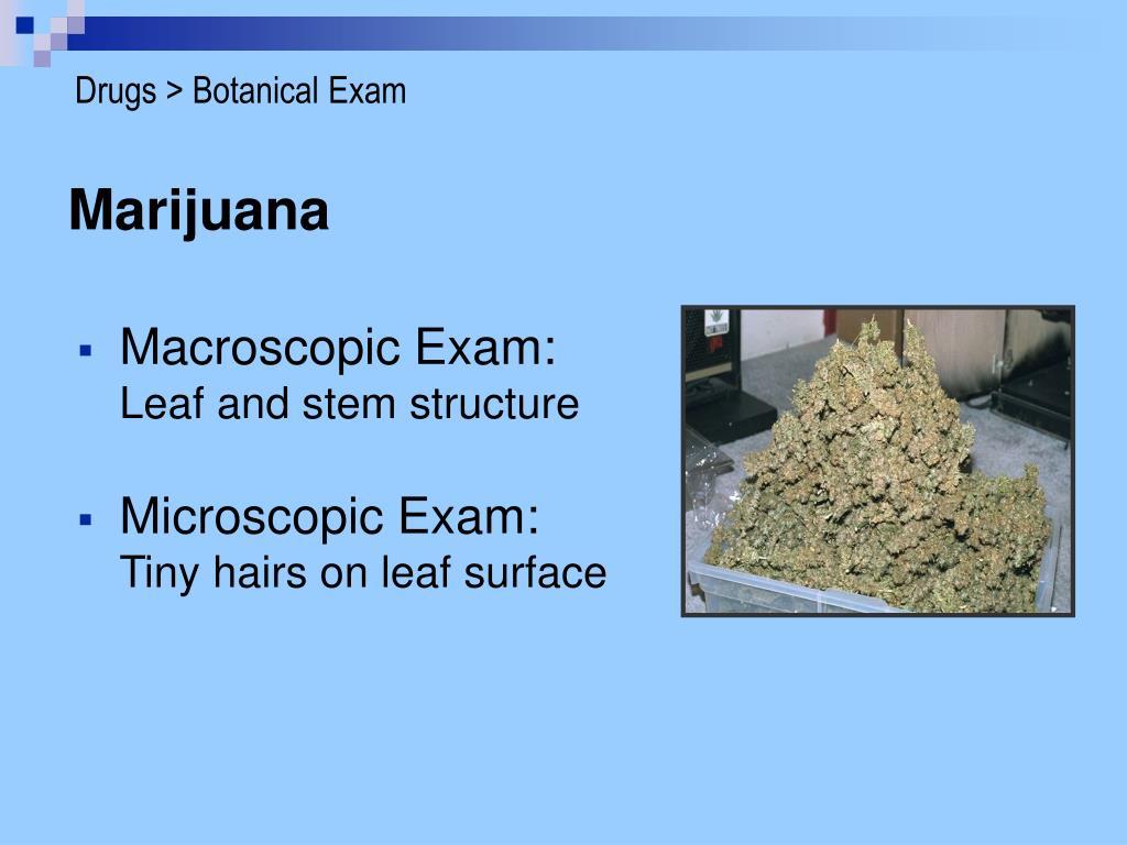 Drugs > Botanical Exam