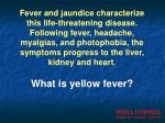 what is yellow fever
